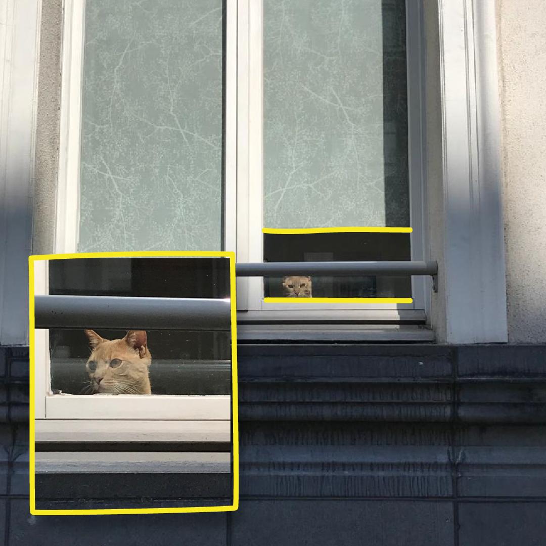 Confinocat-chat-cat-insta